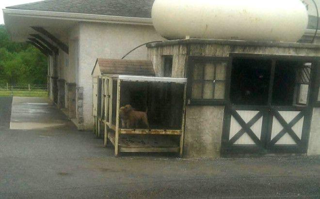 Собачьи фермы