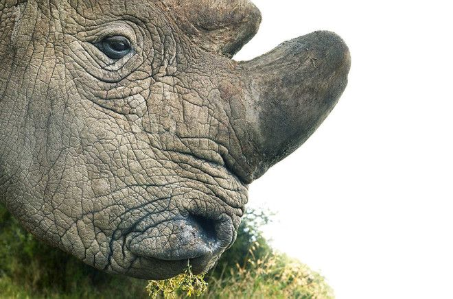 Животные на грани исчезновения