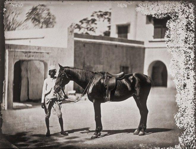 Одна из лошадей принадлежащих махарадже Джайпур примерно 1857 год