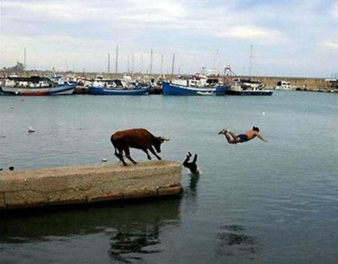 Неприятность с быком