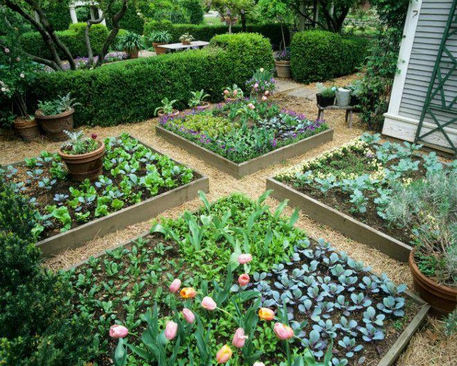 Зонирование огорода квадратными грядками