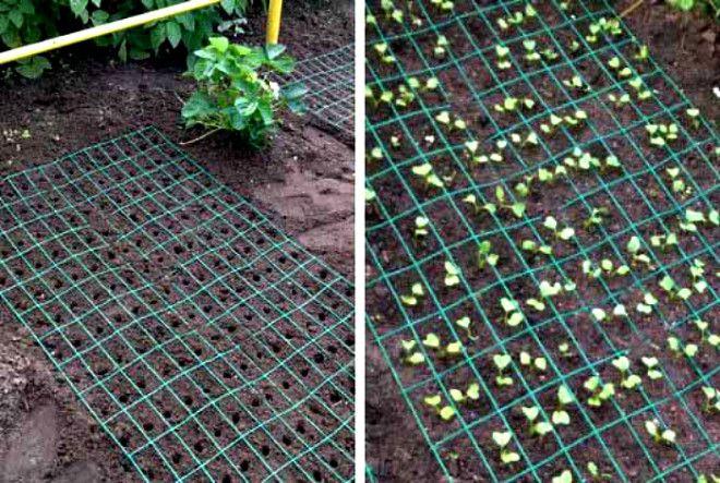 Сетка для защиты растений