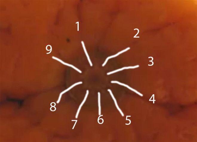 SКак на спор узнать сколько долек в мандарине