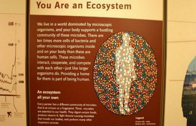 Месяц без душа поизойдет разбалансировка личной экосистемы