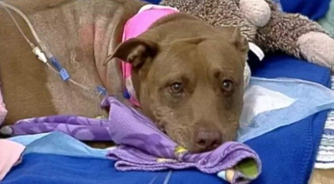 SЭти 10 историй доказывают что люди не заслуживают собак