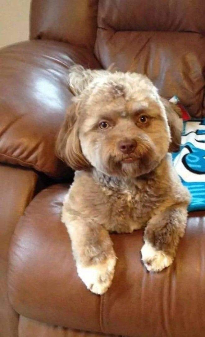 SЭта собака напугала весь Интернет потому что у нее человеческое лицо
