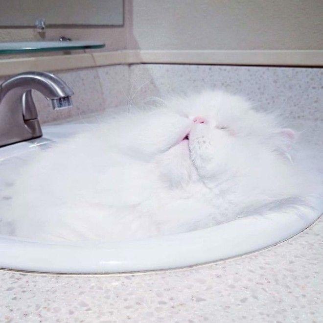 жидкие кошки Растаявшие коты доказательство того что коты жидкие