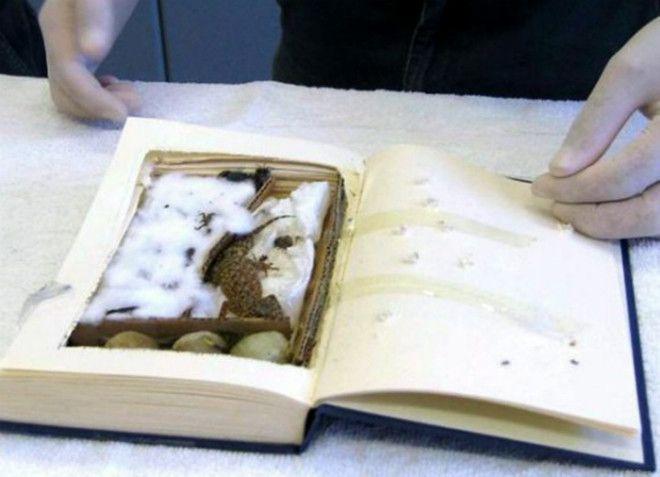 Маленький геккон в книге