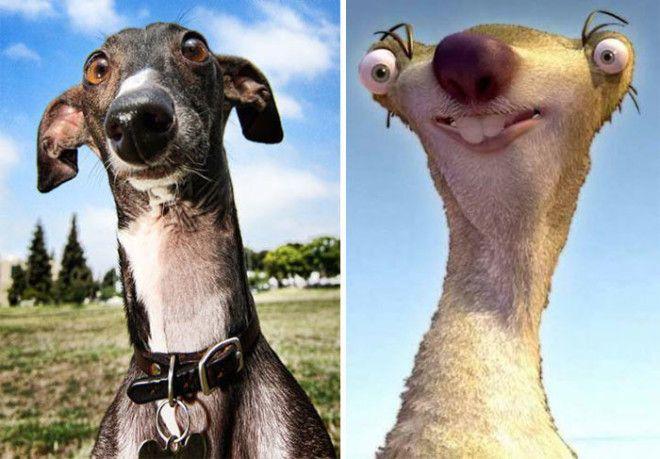 Обратите внимание на огромный нос длинную шею и большие глаза этой собаки породы грейхаунд