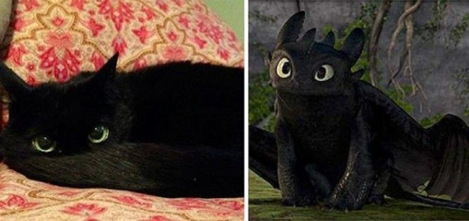 У кота тот же окрас тот же цвет глаз чем не прототип для черного дракона