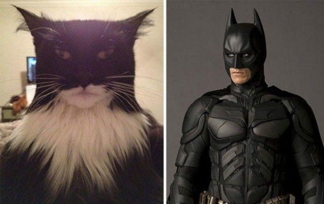 Большой и серьезный кот с окрасом в виде маски супергероя