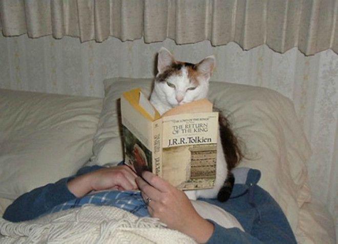 Кот ученый читает