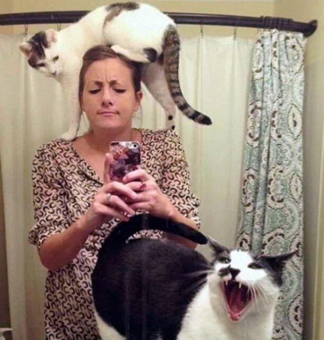 Какое фото без котов