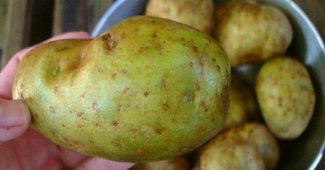 Картофель с зелеными участками