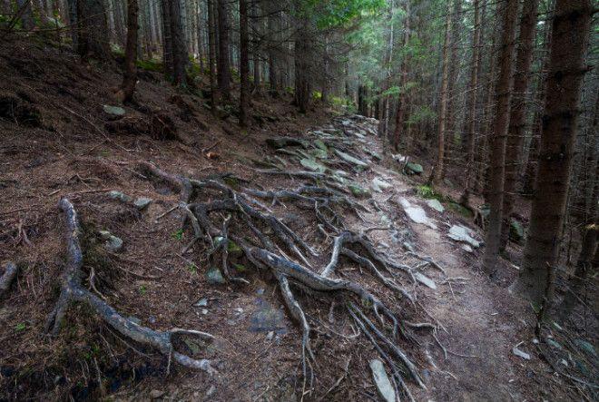 Аокигахара лес для самоубийств