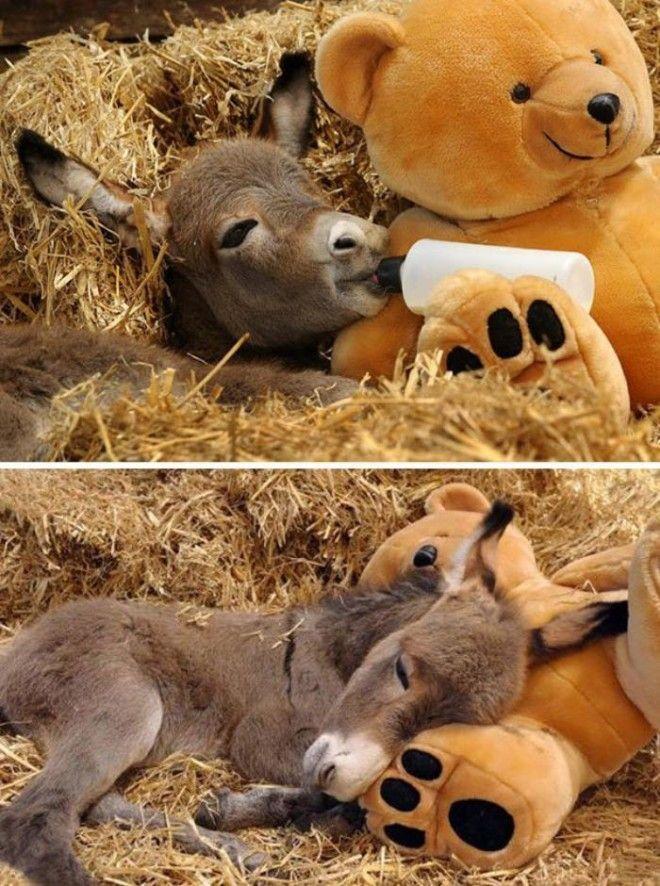 SB12 очаровательных маленьких осликов которые сделают ваш день