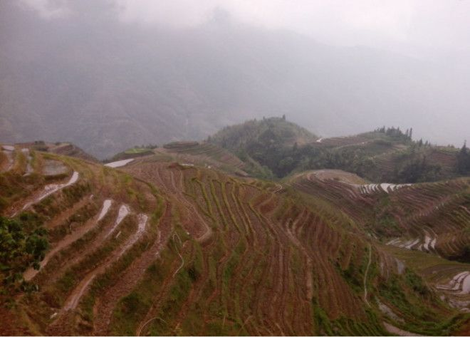 В этих краях растет целебная трава Фотоweandchinaru