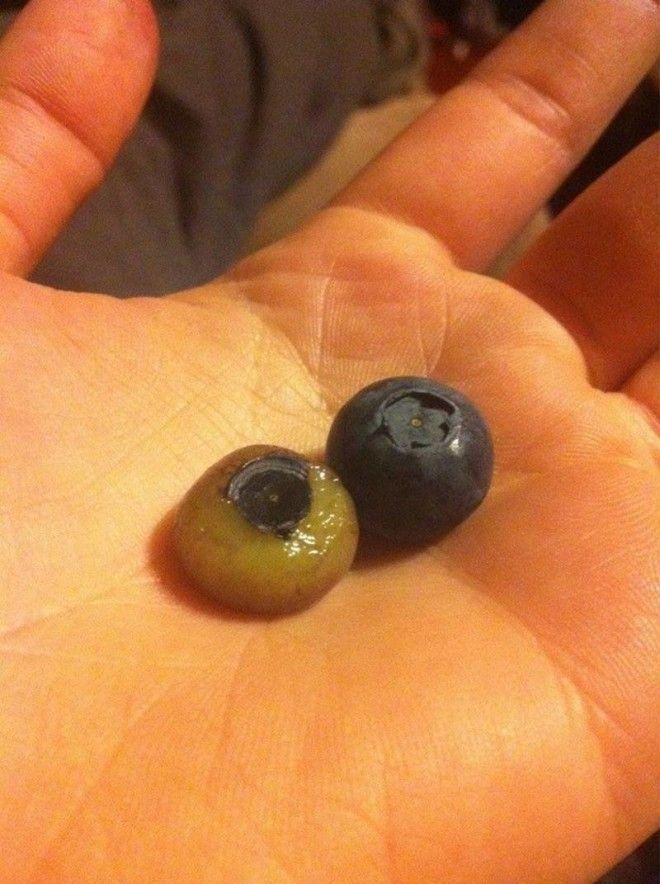 3 Это то что от нас скрывает черника еда овощи прикол фото фрукты