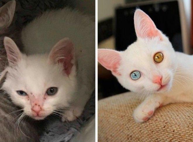 LЧудесное преображение животных до и после того как люди подобрали на улице