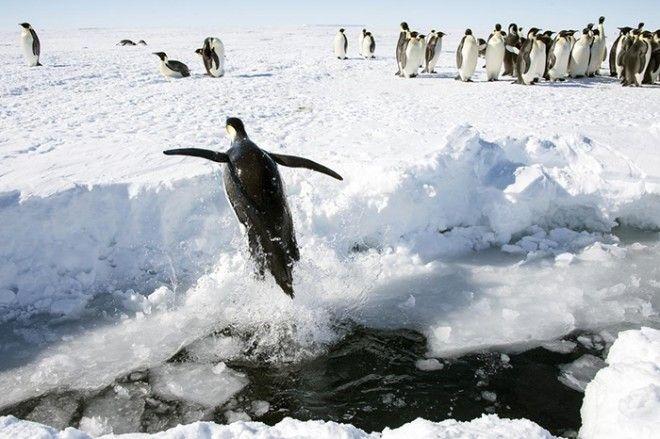 20 фактов об Антарктиде которые на 100 правдивы но в них сложно поверить