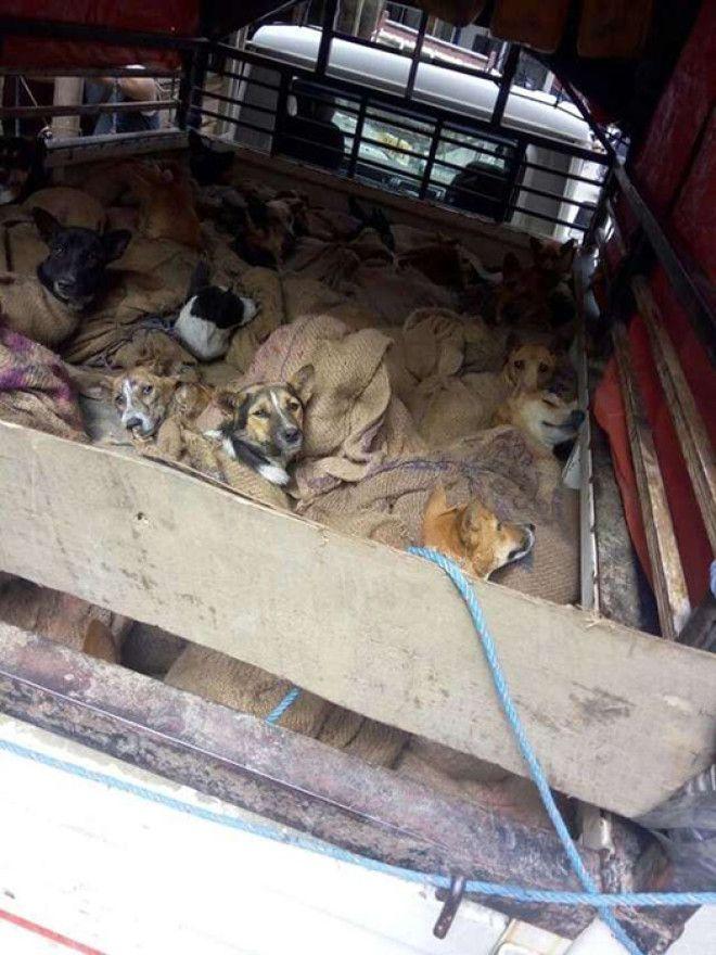 Собак везли в закрытом грузовике