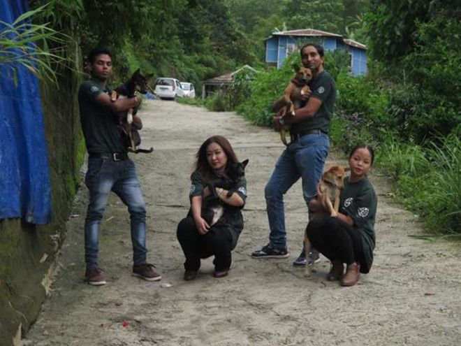 Из 36 спасенных собак 12 погибло