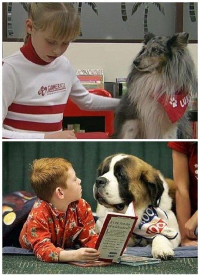 В штат сотрудников библиотеки входят собаки которые обучены внимательно слушать когда ребенок учится читать Центральная библиотека Oodi Хельсинки