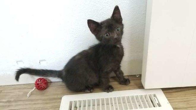 SСупруги взяли котенка из приюта а в переноске они обнаружили сюрприз