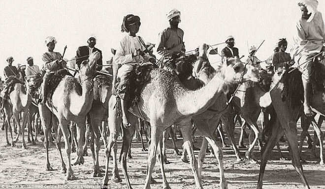 Караван верблюдов следует через Дубай, 1960-е