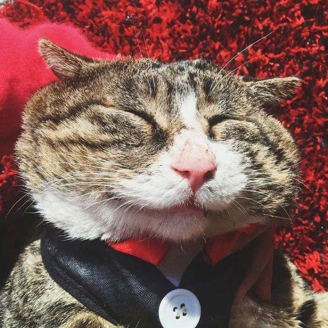 LBАй Фэй очень эмоциональный кот который тянет на звание короля драмы