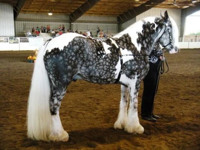 Невероятно красивые создания :-)