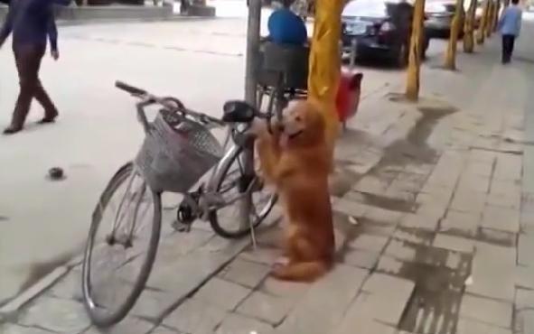 Собака охраняла велосипед, но то, что она сделала дальше, вызвало бурную реакцию прохожих
