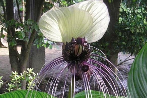 Уникального каждого из этих растений поражает.