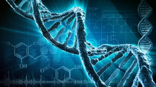 Без ДНК человека не было бы