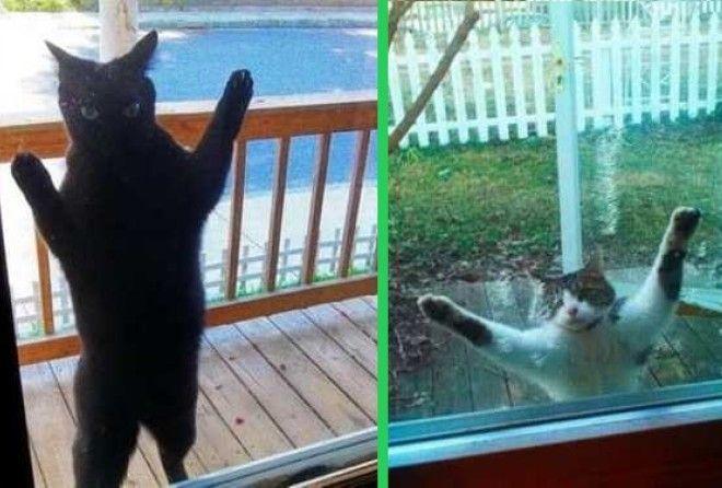 Котики, которые сделают твой день :-D