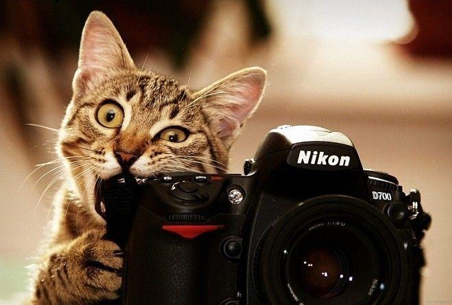 Инструкция для начинающих фотолюбителей