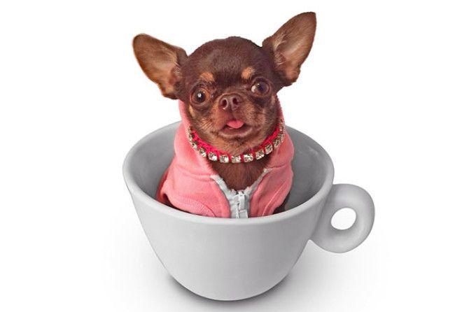 «Милая собачка… Дайте две!»