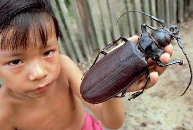 Людям с инсектофобией не смотреть!